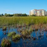 Push is on For Army Corps Wetlands Determinations